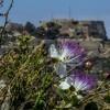 1401272392_flores castillo y sol mayo (145)