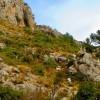 Cabras en La Sierra de Oltá