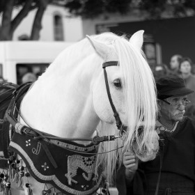 1405372135_caballoblancobw2