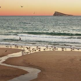 Meandro  aves la mar