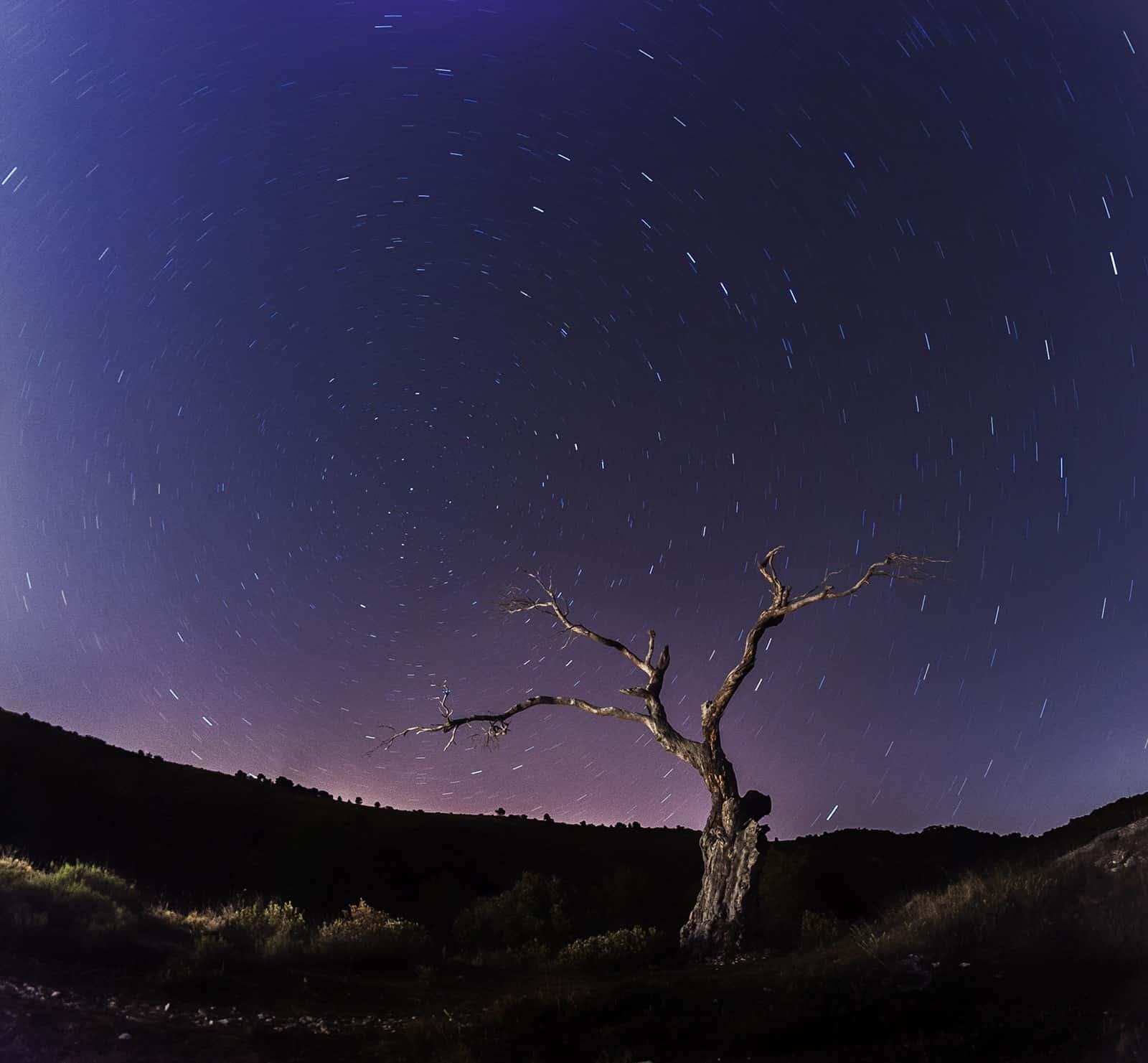 1406228202_el arbol nocturno