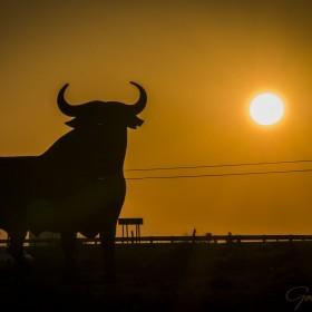 1411986710_bull