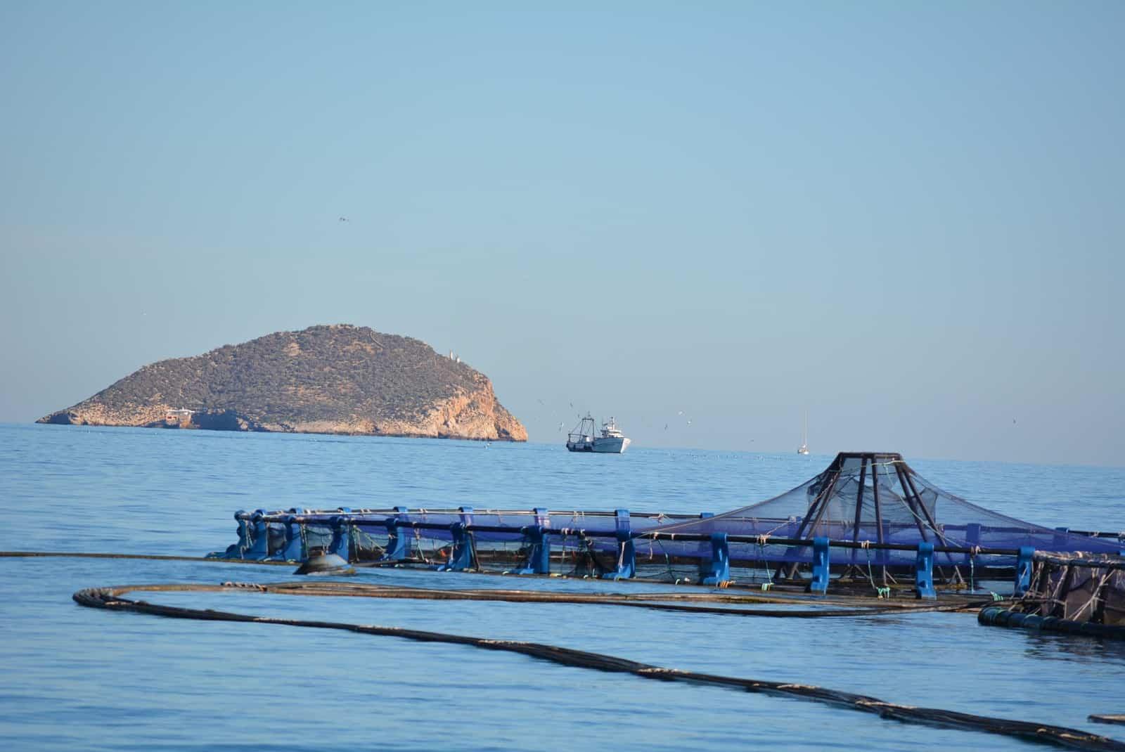 1424181606_La isla de Benidorm desde la piscifactoría de Villajoyosa