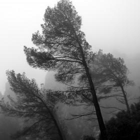 1442137040_Niebla en Olta