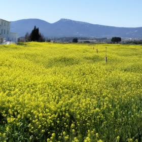1471884362_-Primavera en la Foia de Castalla