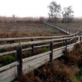 1472230993_Parque Natural El Hondo pasarela