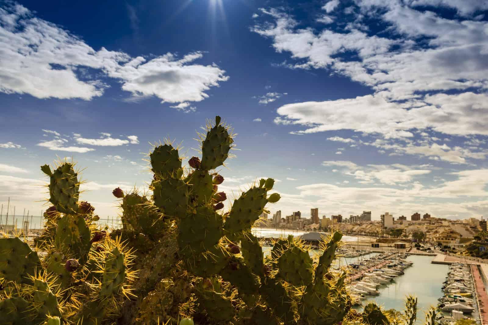1485186841_puerto deportivo El Campello_1