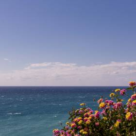 1492894422_flores frente al mar