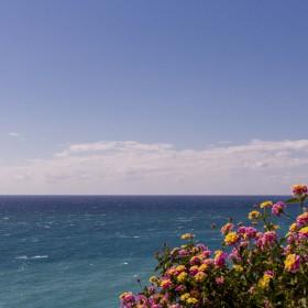 1495789886_flores frente al mar