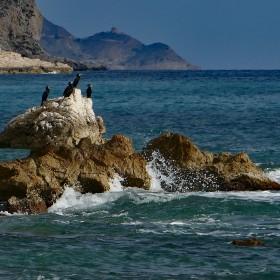 1500569598_Cormoranes,  Playa Tio Roig