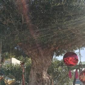 1514048750_Árbol de Navidad