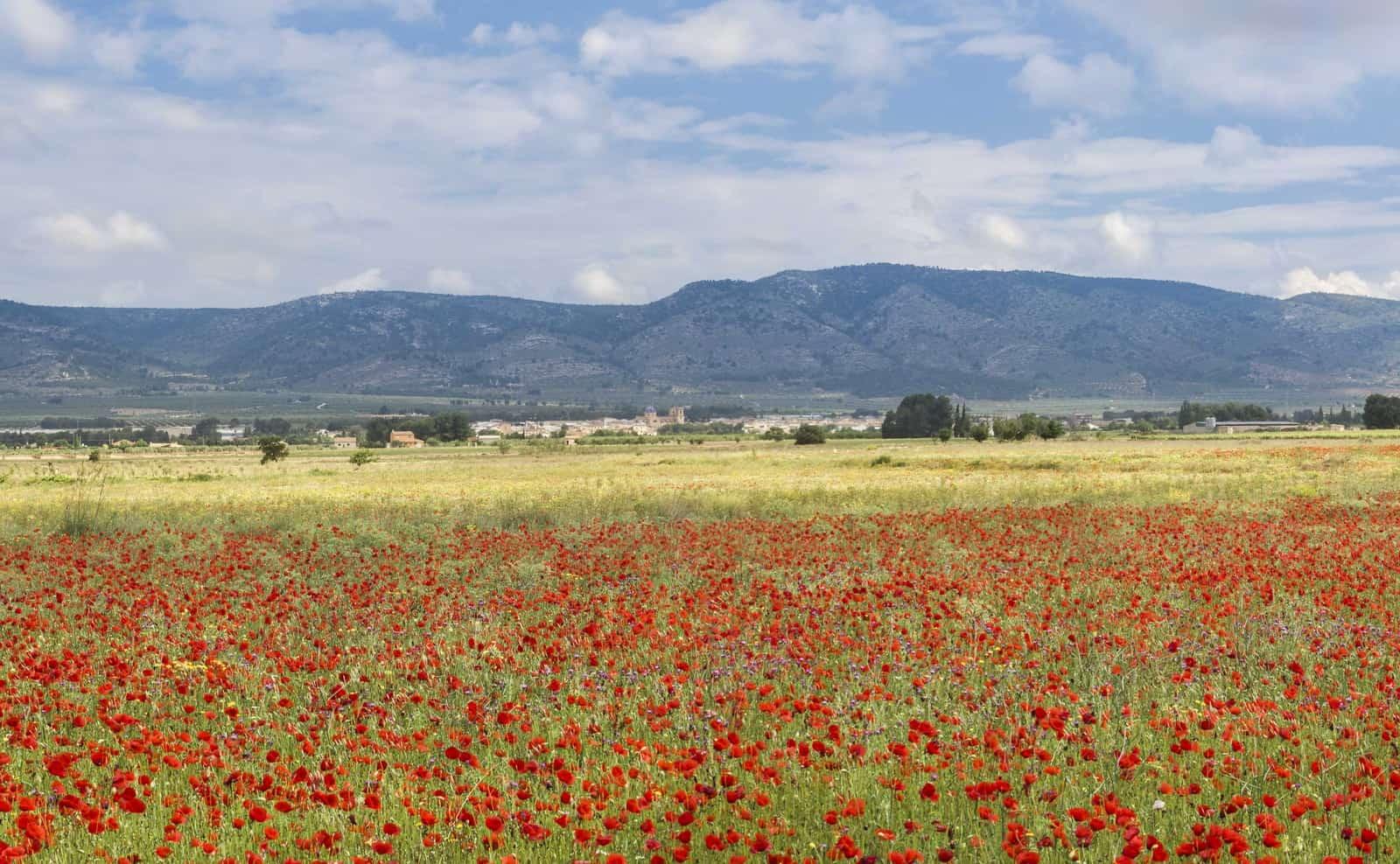 1529820831_Campo de mirra y la sierra de benejama