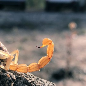 1554495243_Scorpion