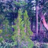 1555614670_bosque