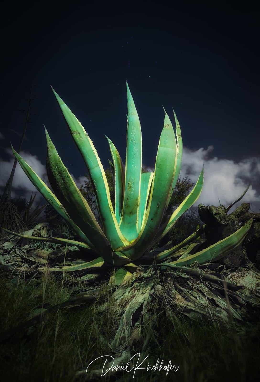 1556819832_Serra grossa Alicante Cactus