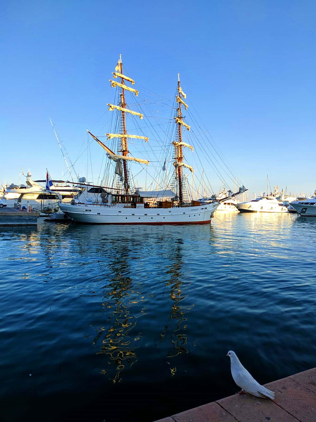 1559937689_El Puerto y la paloma