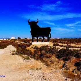 1568843215_Toro -