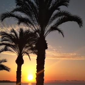 1600085135_Entre palmeras