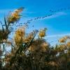 1603989074_YolyGomi #ElHondo #EnamoradosdeAlicante #ParqueNatural #avesmigratorias #fauna