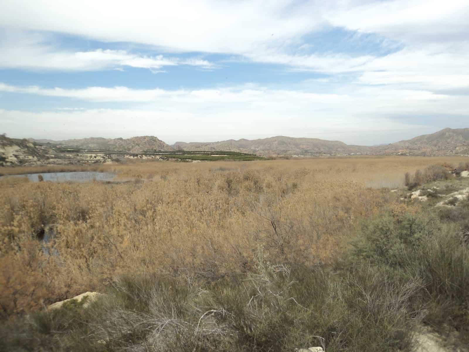 1604139278_Terrenos pantanosos