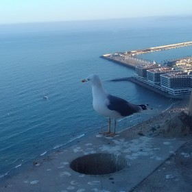 1604140366_Observador del litoral