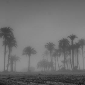 1604164488_niebla palmeras