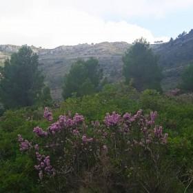 1635177715_Camino al Coll de Rates