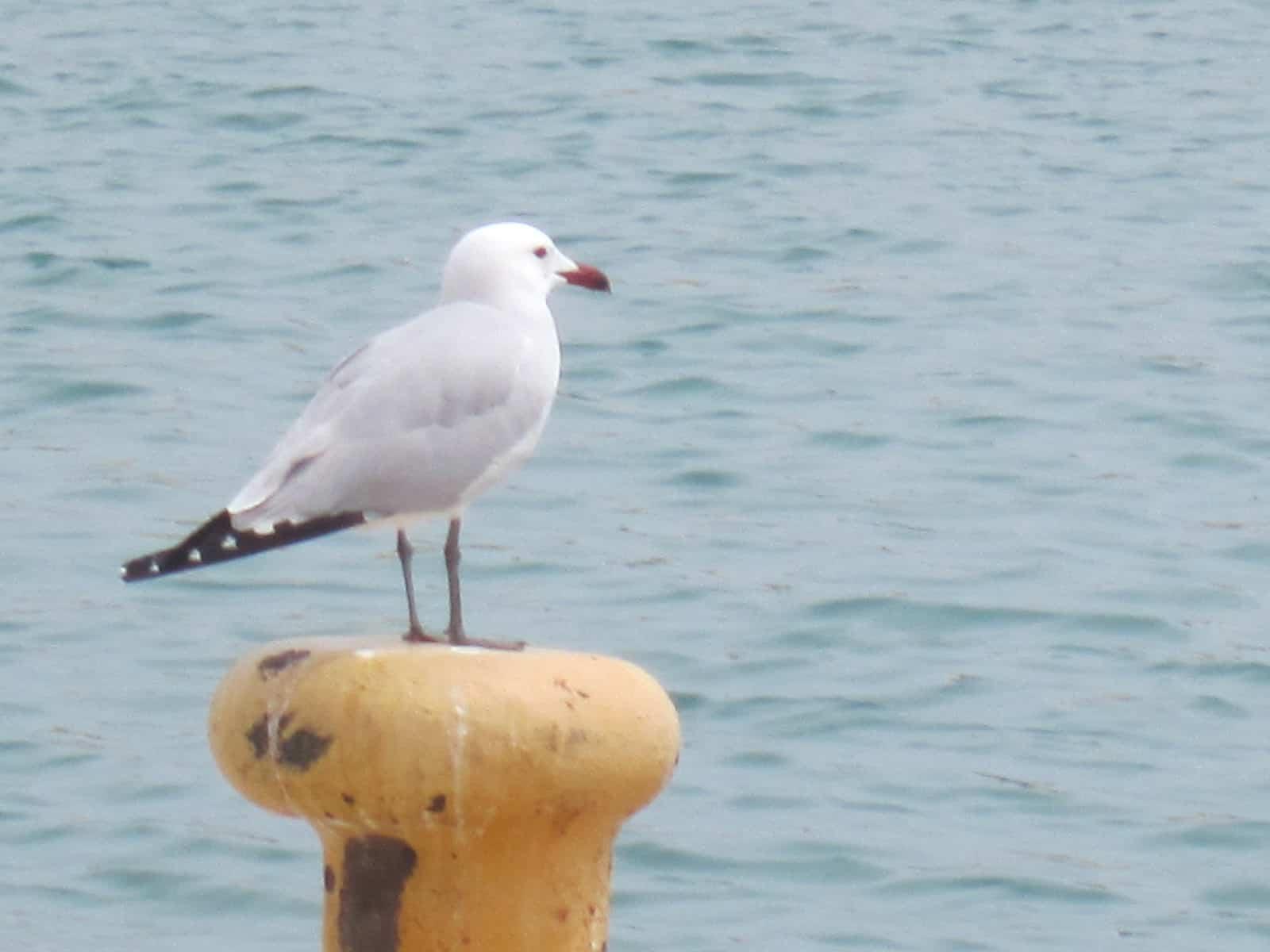 VISITA AL PARQUE P.DEL MAR,12-5-2012 075 - copia